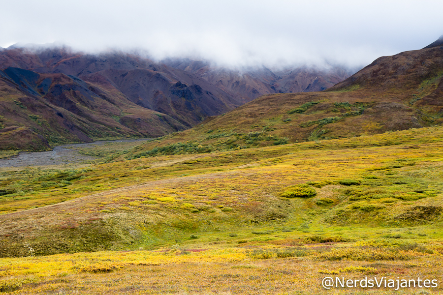 Highway Pass - Denali National Park
