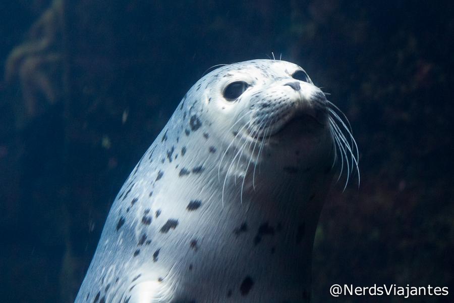 Foca no Alaska SeaLife Center