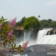 Flores na Cachoeira da Velha - Jalapão