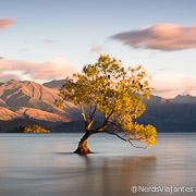 That Wanaka Tree, a linda árvore que fica dentro do lago na cidade de Wanaka - Nova Zelândia